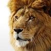 Mac OS X Lion: nový systém i aplikace
