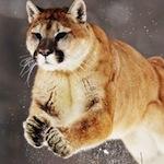 Pár tipů a triků pro OS X Mountain Lion